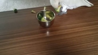 Papagaio Bravo Por Que Não Quer Comer Brócolis, Kkk! Até Ele Não Gosta!