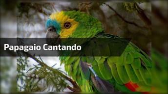 Papagaio Cantando Música Beber, Cair E Levantar, Muito Engraçado!