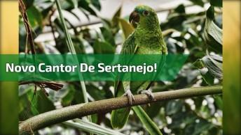 Papagaio Cantando Música Sertaneja, Confira E Compartilhe!