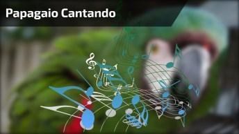 Papagaio Cantando Sia - Chandelier, Que Coisa Mais Impressionante!