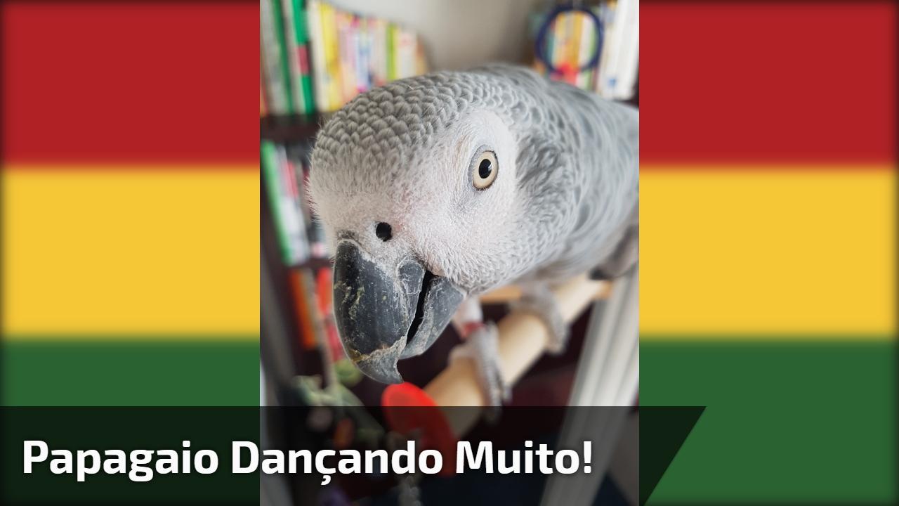 Papagaio dançando muito!