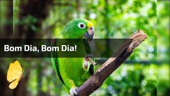 Papagaio Falando Bom Dia, Envie Para Seus Amigos Do Whatsapp!
