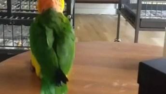 Papagaio Fazendo Dancinha, Olha Só Que Coisinha Mais Engraçadinha!