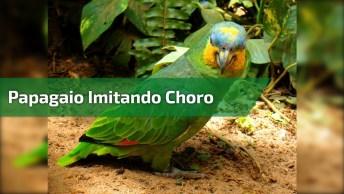 Papagaio Imitando Choro De Criança, Olha Só O Drama Deste Amiguinho!