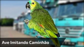 Papagaio Imitando O Barulho Das Motos Que Passam Na Rua!