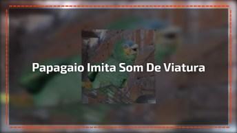 Papagaio Imitando Som De Viatura Da Policia, Olha Só Como Ele Imita Bem!