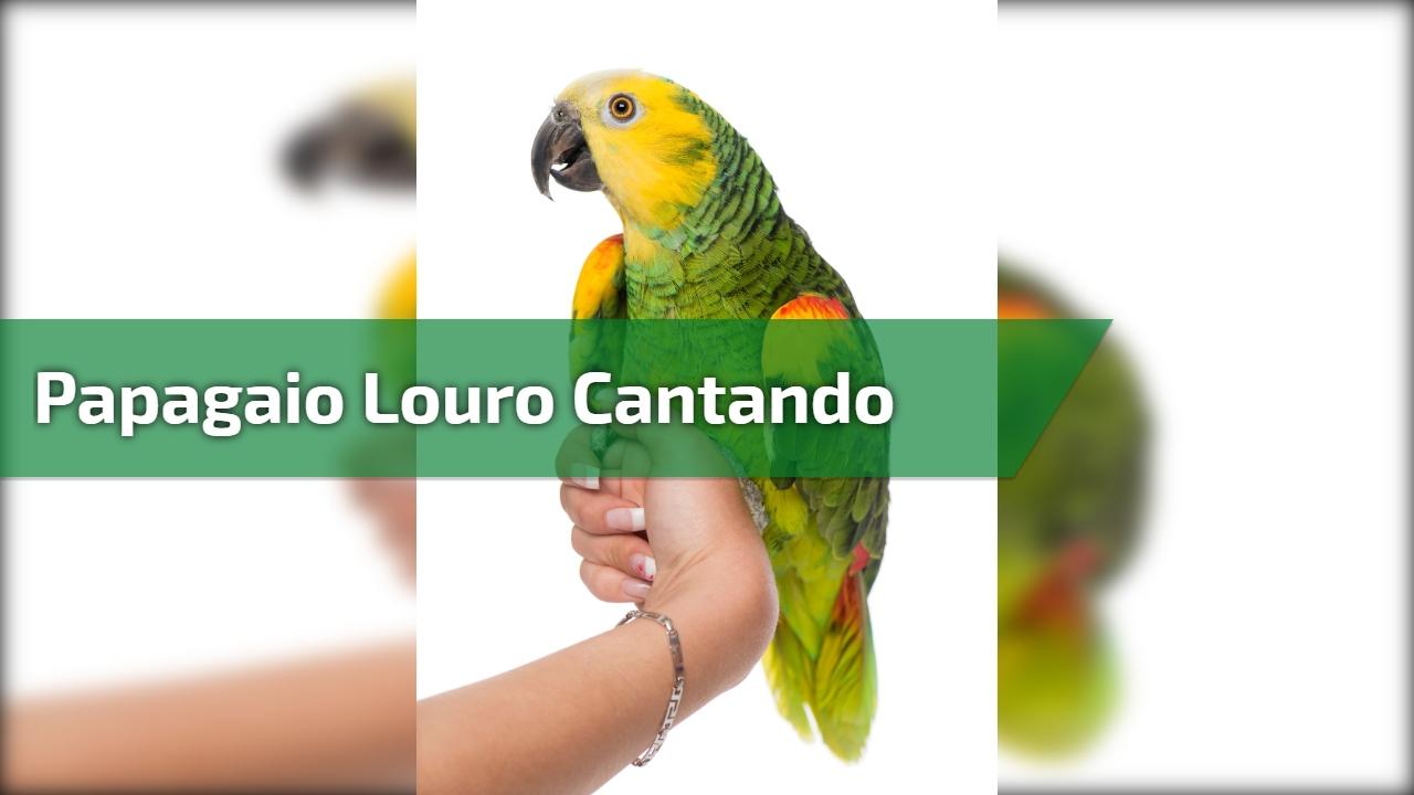 Papagaio Louro cantando