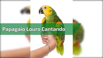 Papagaio Louro Cantando Música 'Mãezinha Do Céu', Que Belezinha!