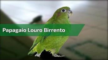 Papagaio Louro Desobediente E Mão Criado Hahaha, Olha Como Ele Responde!