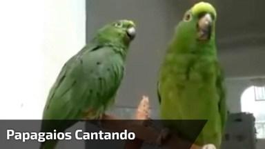 Papagaios Cantando, Olha Só Que Animal Mais Incrível, Vale A Pena Conferir!