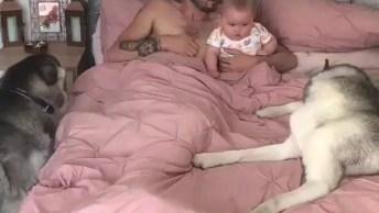 Papai Acordando Com O Bebê E Os Cachorros, Confira Essa Fofura!