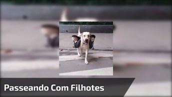 Papai Cachorro Dando Um Voltinha Com Seus Filhotes, E Com Muita Segurança!