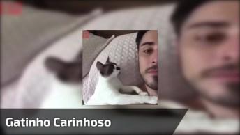 Para Todas Amigas Apaixonadas Por Gatos De Plantão, Olha Esse Gatinho!