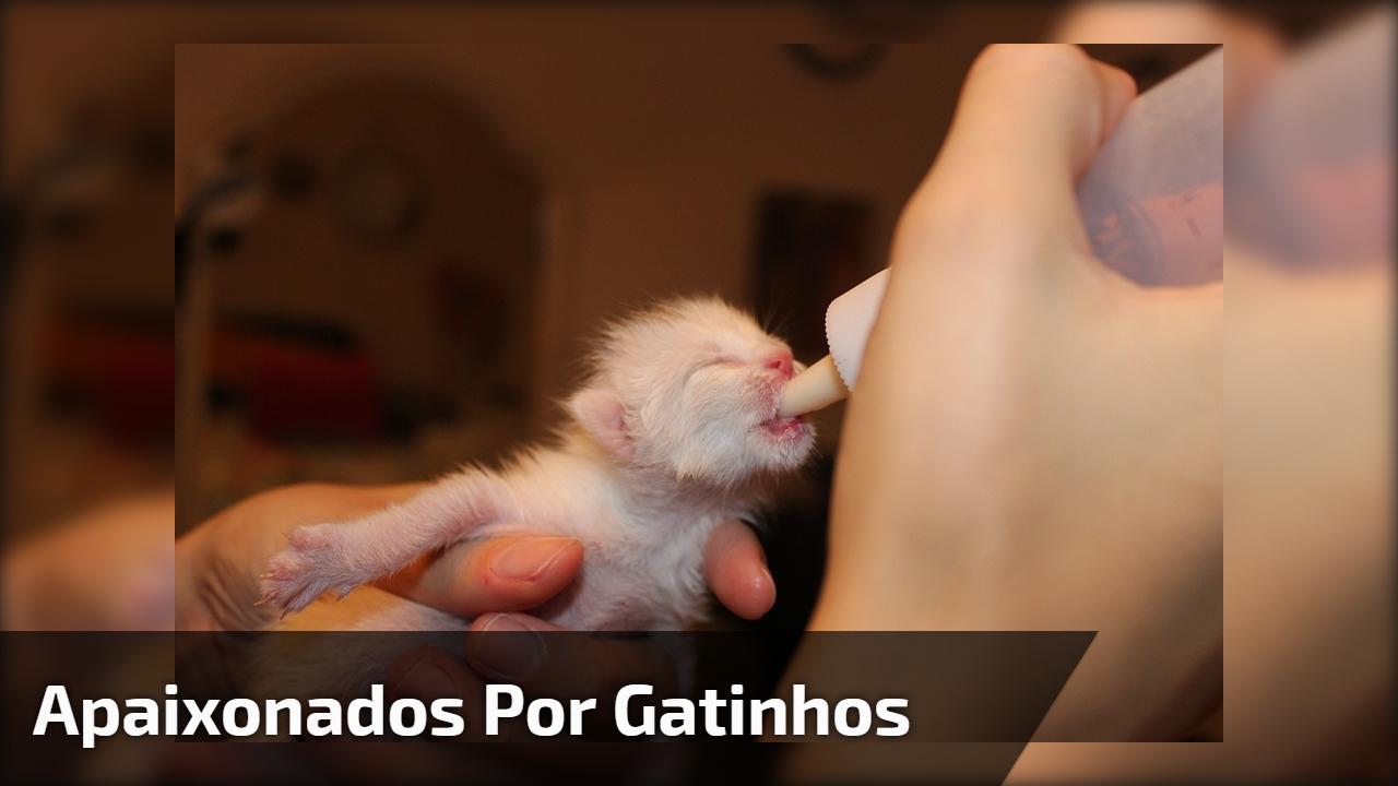 Para todos apaixonados por gatinhos, olha só o tamanhinho deste filhote!!!
