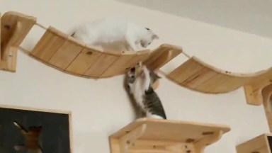 Parquinho Para Gatos, Eles Vão Amar Essa Ideia, Confira!