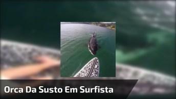 Passando Medo Com Uma Baleia Assassina, O Que Você Faria?