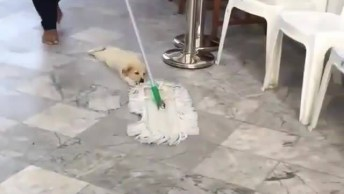 Passando Pano No Chão Com Cachorro, Ele Esta Se Divertindo!