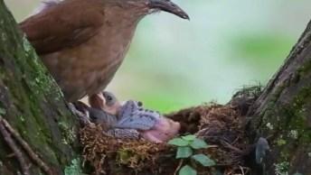 Passarinho Alimentando Seus Filhotinhos, Olha Só Que Coisa Mais Linda!