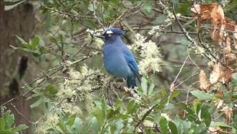 Passarinho Azul Lindo, Sentado Em Uma Árvore, Como A Natureza É Bela!