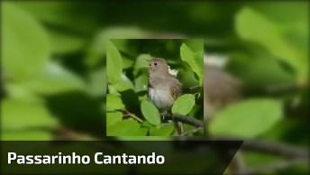 Passarinho Cantando, Como A Natureza É Maravilhosa, Confira!