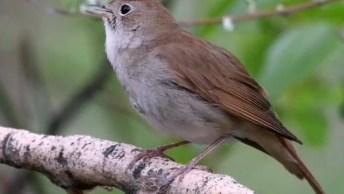 Passarinho Cantando Na Natureza, Que Criaturinha Mais Linda!