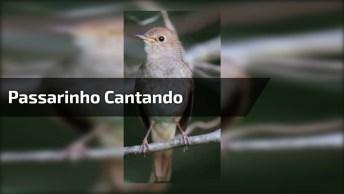 Passarinho Cantando, O Mundo Animal É Incrível, Vale A Pena Compartilhar!