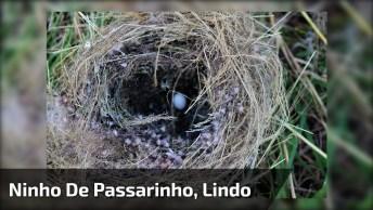 Passarinho Construindo Ninho, O Milagre Da Vida Em Cada Ser Deste Planeta!