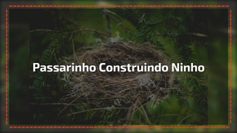 Passarinho Construindo Seu Ninho, A Natureza É Perfeita Em Cada Ser Vivo!