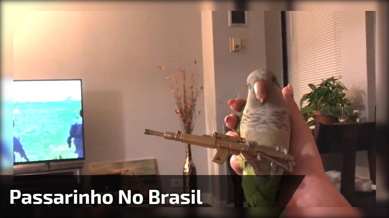 Passarinho no Brasil