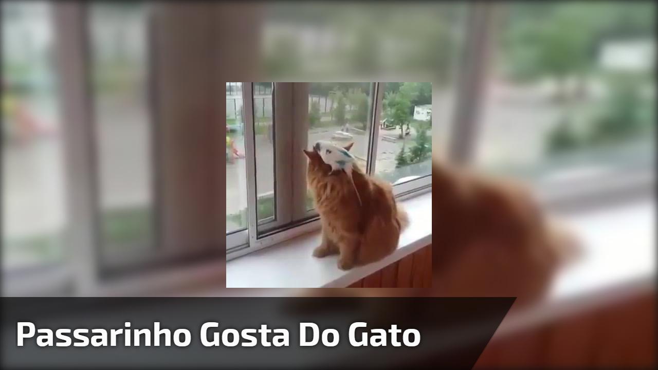 Passarinho provocando gato que estava quieto hahaha, confira!