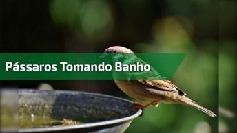 Passarinho Se Banhando Em Um Bebedouro Para Pássaros, Como É Linda A Natureza!
