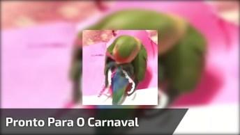 Passarinho Se Preparando Para O Carnaval, Que Coisa Mais Fofa!