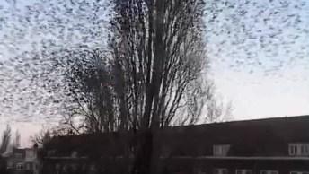 Passarinhos Saindo De Uma Árvore, Olha Só A Quantidade De Animais!