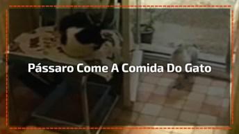 Pássaro Entra Dentro De Casa Come A Comida Do Gatinho E Sai, Hahaha!