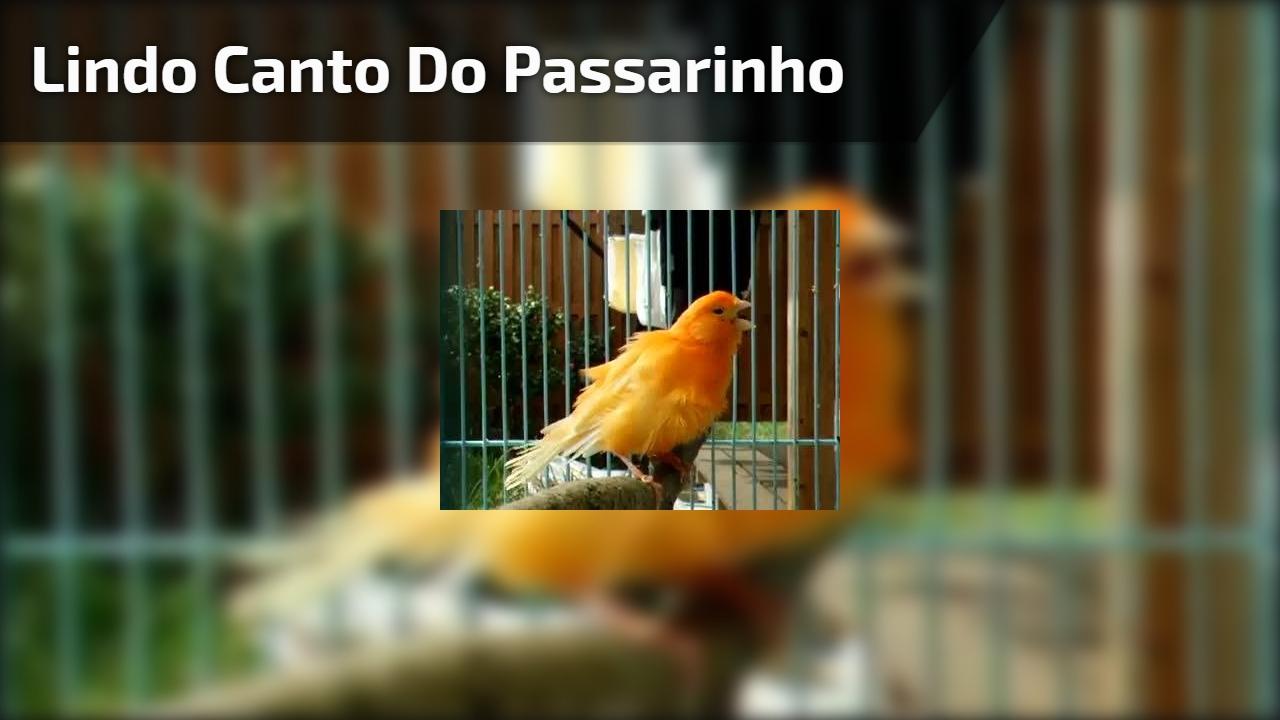 Pássaro faz linda apresentação de canto em sua gaiola, confira!