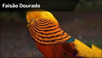 Pássaro Mais Lindo Dia Dia, Alguém Sabe O Nome Dessa Espécie?