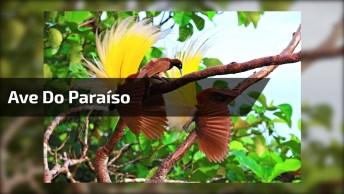 Pássaro Marrom Com Pluma Amarela Nas Costas, Que Desenho Da Natureza!