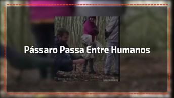 Pássaro Passa Entre Humanos Para Pegar Alimento, Confira!