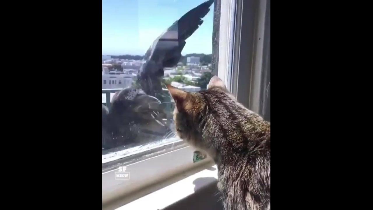 Pássaro tenta atacar gato