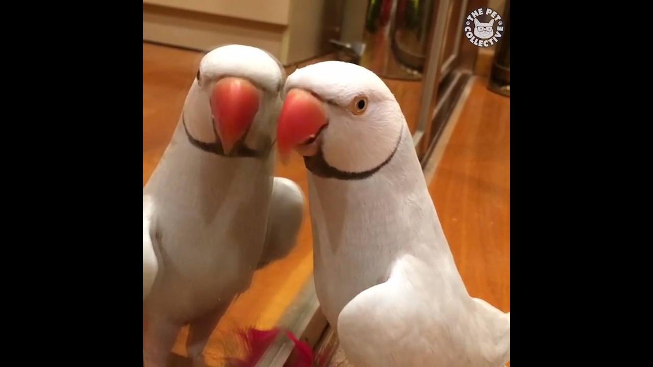 Pássaros fazendo coisas engraçadas