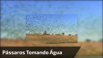Pássaros Verdes Reunidos Para Tomar Água, Veja Quantos Deles Juntos!