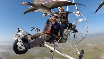 Pássaros Voando Filmados Bem De Perto, Imagens Que Impressionam!