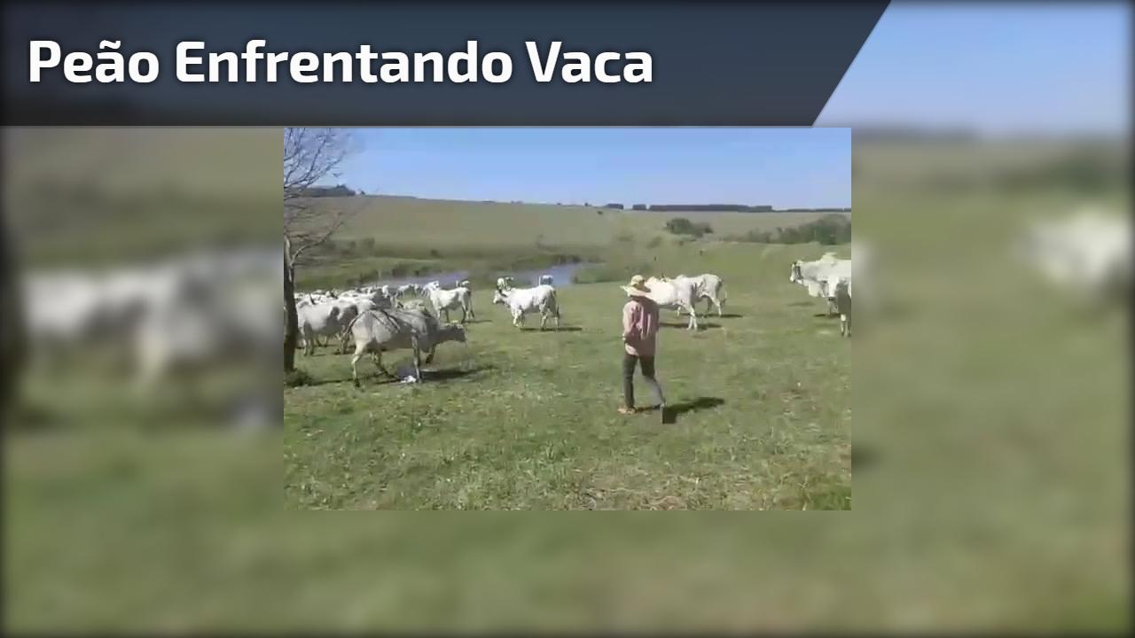 Peão enfrentando vaca