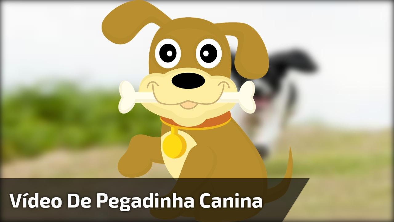 Vídeo de Pegadinha canina