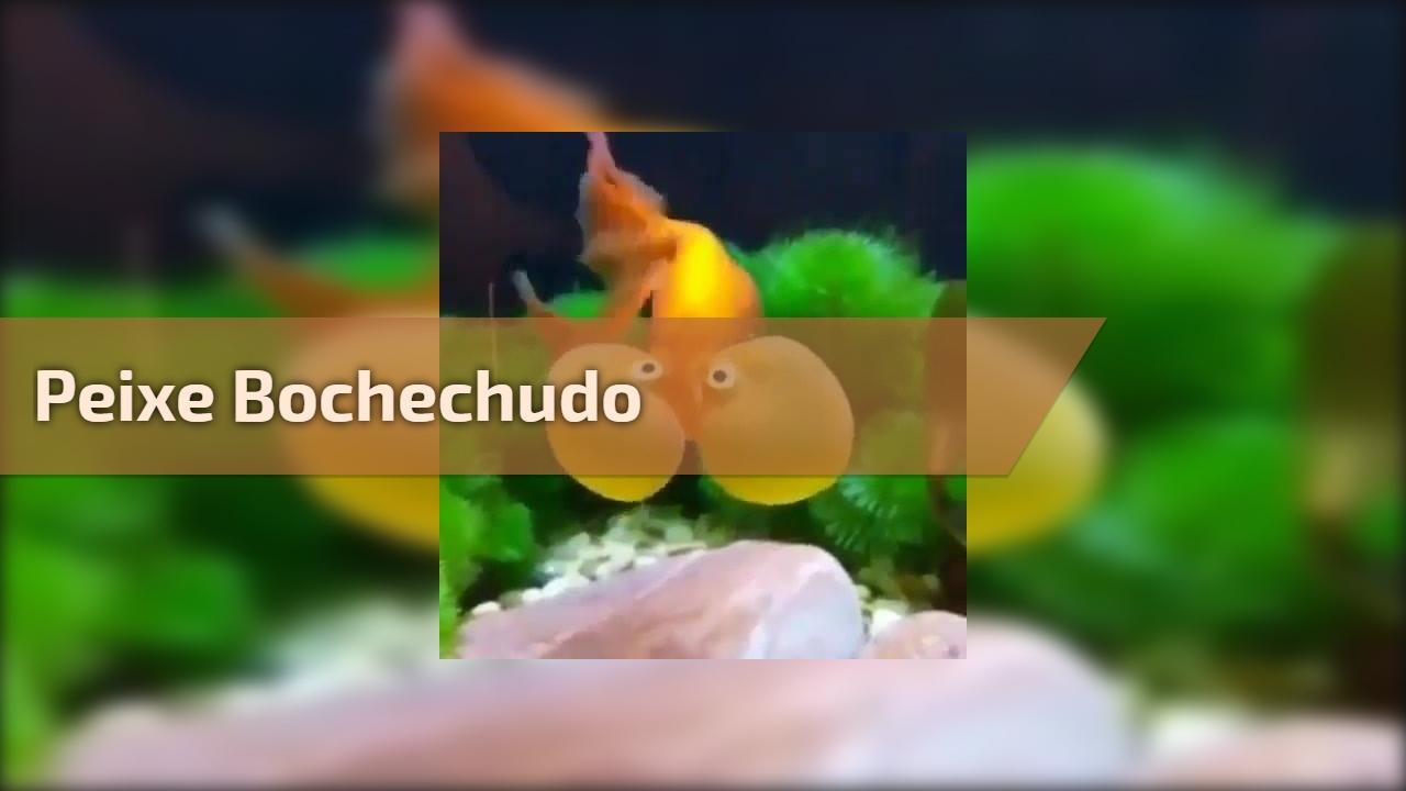 Peixe bochechudo