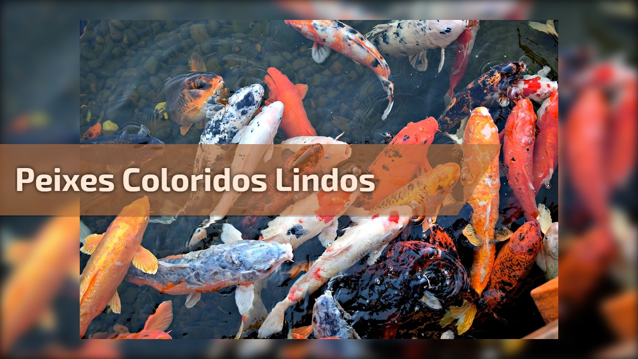 Peixes coloridos lindos