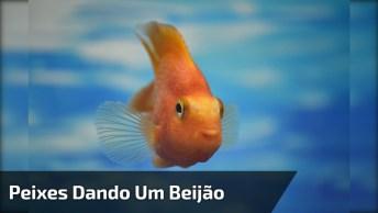 Peixes Dando Um 'Beijão' Dentro Do Aquário, Quanto Amor!