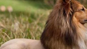 Penteados Em Cães, Um Legal, Outro Engraçado E Por Ai Vai Kkk!