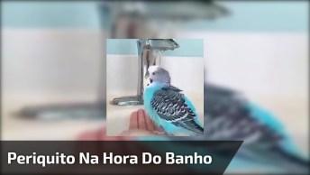 Periquito Azul Tomando Banho Matinal Na Torneira, Olha Só Que Coisinha Mais Fofa