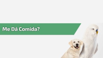 Periquito Dando Comida Para Seu Amiguinho Cãozinho, Olha Só Que Imagem Fofa!
